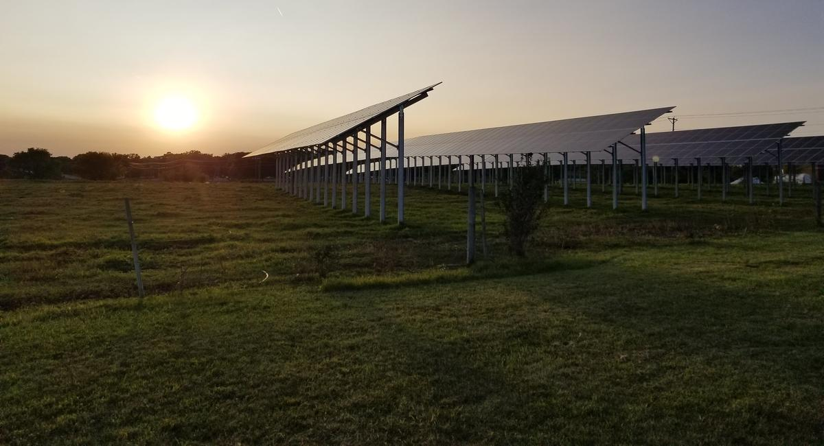 A large solar array on a field of green grass, seen at Golden Hour