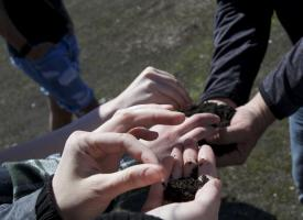 Several pairs of hands holding compost